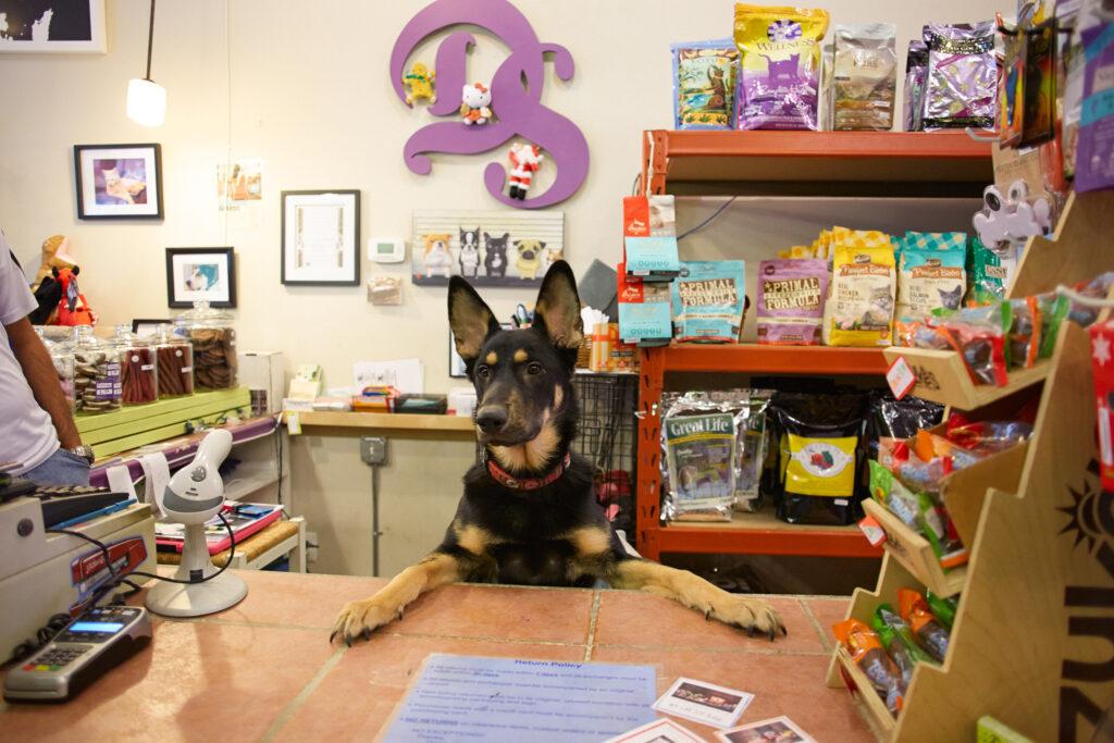 Exemplo de indicação de abertura de empresa do ramo de pet shop
